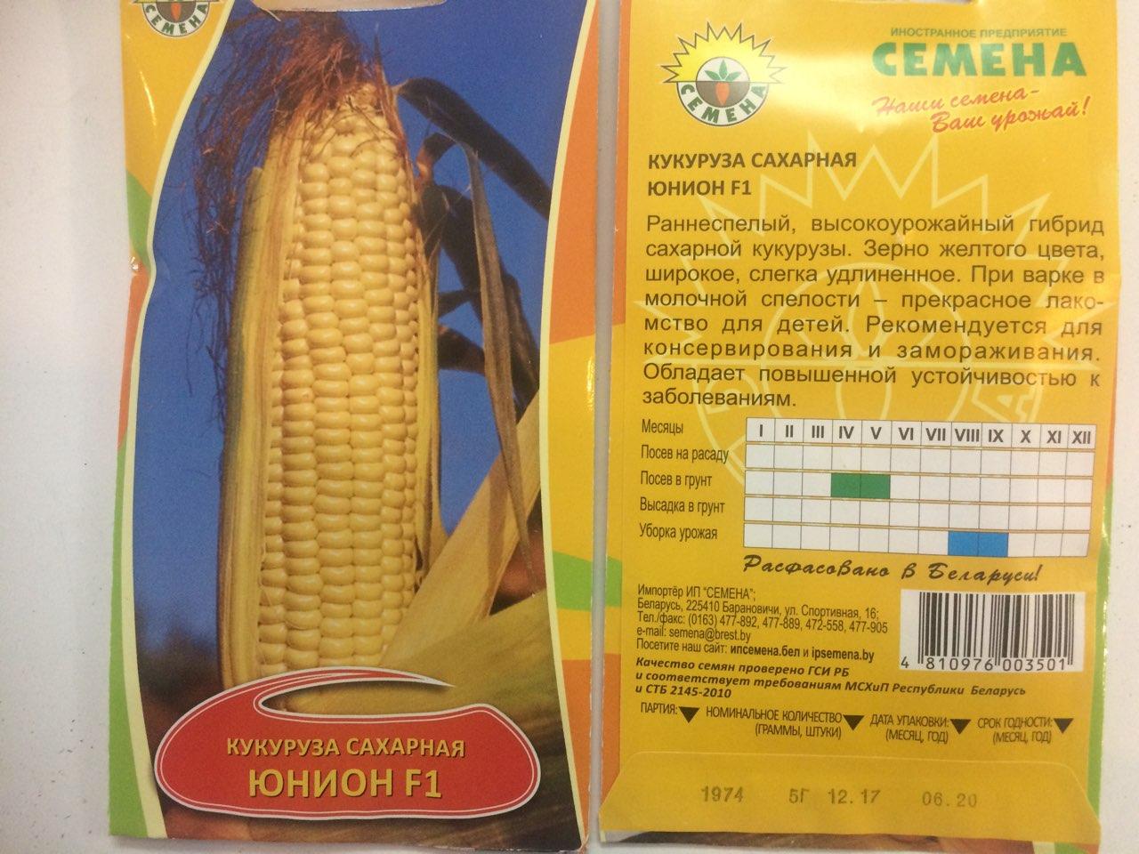 Как получить семена кукурузы в домашних условиях: отбор, сбор, хранение 76